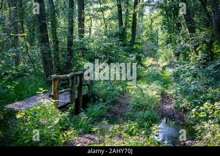 A wooden bridge crossing a small stream in a very lush green forest with rays of sunshine through the trees in nature reserve Zarth near - Stock Photo