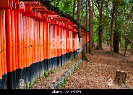 Multiple torri (Senbontorii) gates forming the route through Shinto Fushimi Inari Taisha Shrine, Fukakusa, Shimoseya, Kyoto Fu, Japan. - Stock Photo