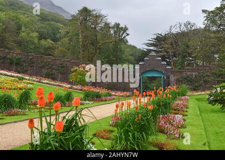 walled Victorian Gardens at Kylemore Abbey, County Galway, Connemara, Republic of Ireland, North-western Europe. - Stock Photo