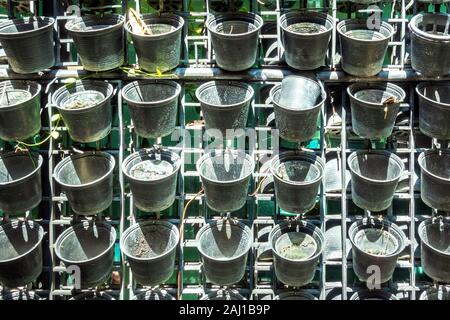 Many small, empty black plastic pots were hung on a metal fence in the garden. - Stock Photo