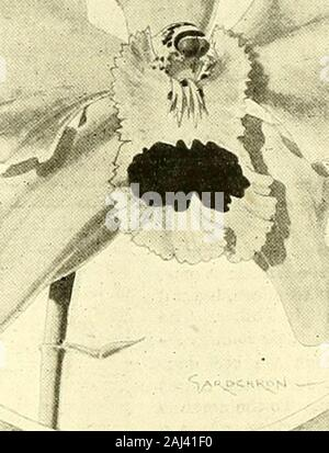 The Gardeners' chronicle : a weekly illustrated journal of horticulture and allied subjects . - Stock Photo
