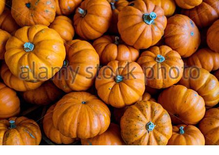 Orange pumpkins on brown wooden table - Stock Photo
