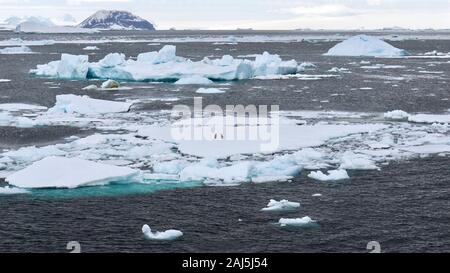 Drifting icebergs and growlers in the sea in Antarctica, with two Adelie penguins (Pygoscelis adeliae) visible on a large flat iceberg. - Stock Photo
