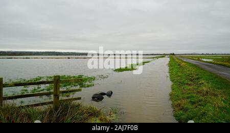 Flooded fields near Mark, Somerset, England - Stock Photo