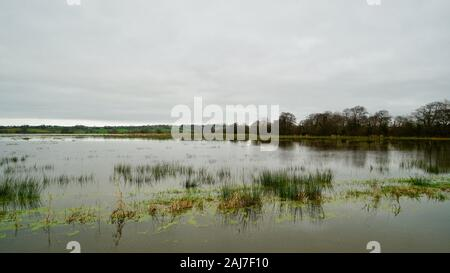 Flooded fields near Mark, Somerset - Stock Photo