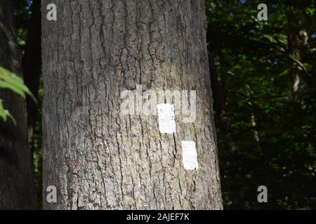Two white squares or rectangles painted on a tree trunk in the forest to mark a trail. - Stock Photo