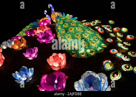 Warsaw, Poland - December 16, 2019: Peacock couple and blossoming flowers illuminated at night at Chinese Light Festival at Fort Bema - Stock Photo