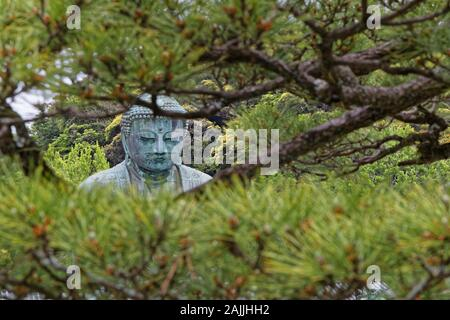 KAMAKURA, JAPAN, May 13, 2019 : Kotoku-in. The temple is renowned for its Great Buddha (Daibutsu), a monumental outdoor bronze statue of Buddha, one o - Stock Photo