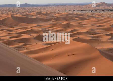The half-light of dawn illuminates the ever-moving sands of Erg Chebbi Dunes producing a fascinating range of colours, Merzouga, Morocco, Africa.