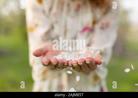 A close-up of a girl palm blows off a handful of white petals that fell from a flowering tree. Attractive young girl with flowers - Stock Photo