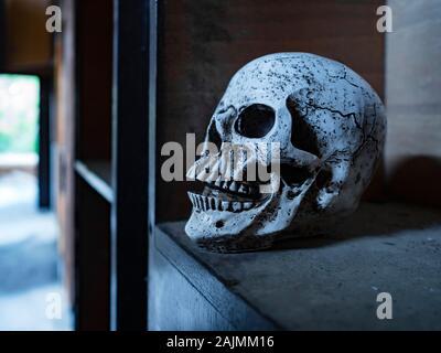 Skull isolated in closet close-up closeup - Stock Photo