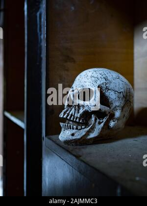 Skull isolated in closet close-up closeup - Stock Photo
