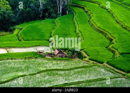 Rice paddies, Bali, Indonesia - Stock Photo