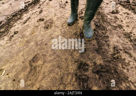 Dirty farmer's rubber boots on muddy country road. Agronomist is walking the pathway through cultivated fields after heavy rain storm. - Stock Photo