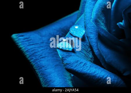 Creative macro photo of a rose flower with drops of water close-up in the 2020 color trend in dark blue colors - Stock Photo