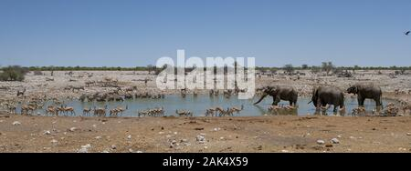 Okaukuejo: Elefant, Oryx, Springbock und Streifengnus am Wasserloch von Okaukuejo im Etosha Nationalpark, Namibia | usage worldwide - Stock Photo