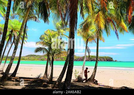 Guanacaste: Palmenstrand an der Playa Carillo, Costa Rica | usage worldwide - Stock Photo