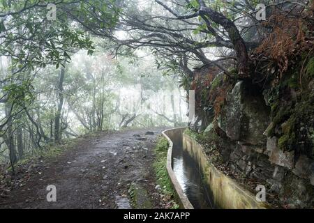 The Levada do Furado on Madeira Island, Portugal wiggles around a corner in the misty mountainside forest with sunlight bursting in through the trees. - Stock Photo