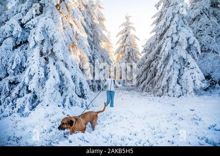Young woman walking with dog between white trees covered in fresh snow on sunny winter day in mountain - Stock Photo