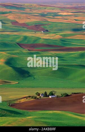 Landscape with agricultural fields on rolling hills, Colfax, Palouse, Washington State, USA - Stock Photo