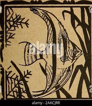 Blätter für Aquarien- und Terrarien-Kunde . fcik SS - Stock Photo
