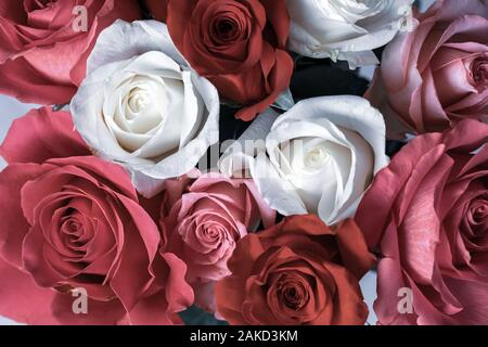 Close up view of desaturated roses.