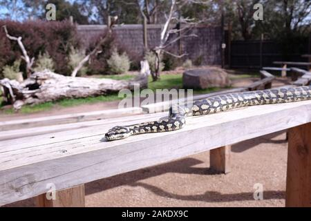 Moonlit Sanctuary Wildlife Park - Stock Photo