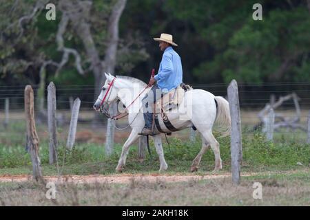 Brazil, Mato Grosso, Pantanal area, Cow bboy with his horse in a fazenda - Stock Photo