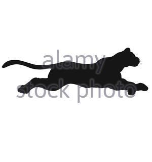 fast run or jump of a big wild cat - Stock Photo