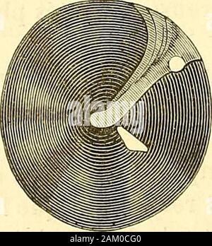 Traité d'anatomie topographique avec applications a la chirurgie . 10. - Stock Photo