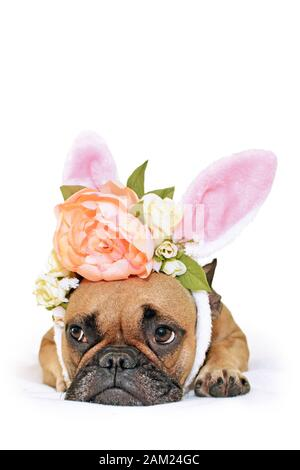 Cute easter bunny French Bulldog dog lying on floor dressed up with peony and roses flower rabbit ears headband costume - Stock Photo