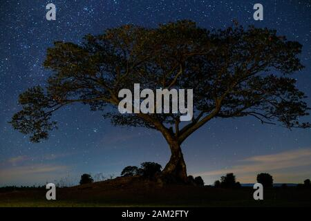 Night tree and starry beautiful natural - Stock Photo