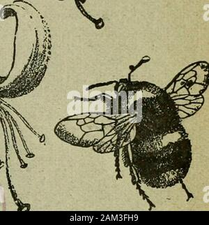 The Entomologist's record and journal of variation . A on. THE ENTOMOLOGISTS RECORI AXD JOURNAL OF VARIATION Edited by J. ^/V. TUTT, F.E.S. Assisted by T. HUDSON BEARE, b.sc, p.e.s., f.e.s.e.M. BURR, F.Z.S., F.E.S. T. A. CHAPMAN, m.d., f.z.s., f.e.s.L. B. PROUT, F.E.S. H. St. J. K. DONISTHORPE, F.z.s., f.] NOVEMBER 13th, 1900.