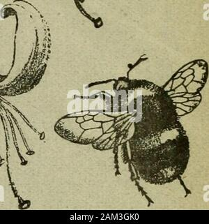 The Entomologist's record and journal of variation . THE .^.^ ENTOMOLOGISTS RECORD JOURNAL OF VARIATION Edited by