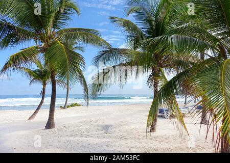 An beautiful white sandy Caribbean beach covered in palm tress with waves from the turquoise Caribbean sea crashing into the shore