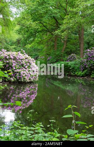 The Tiergarten, walk through the green beautiful park in central Berlin, beautiful large bushes with flowers near the river