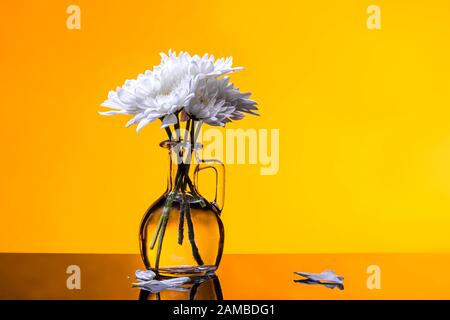 White flowers minimal bouquet in glass vase on golden yellow background - Stock Photo