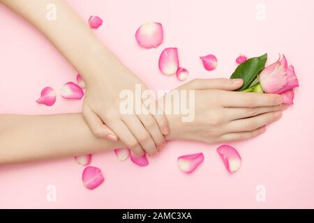 International Womans day and Happy Valentines, Mothers day concept. The woman hands hold rose flowers on a pink background. A thin wrist and natural