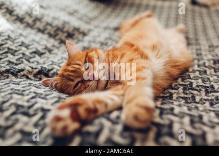 Ginger cat sleeping on couch in living room lying on blanket. Pet having nap at home