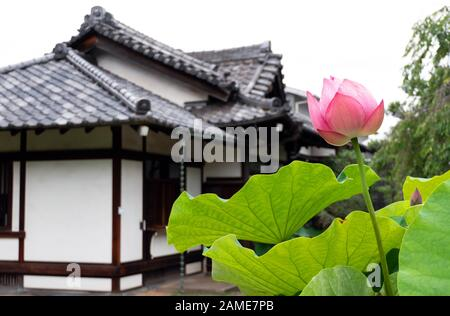 Tennoji or Tenno-ji temple, the oldest shrine in Yanaka area, Tokyo, Japan, Asia. Old Japanese religious building with lotus flower and beautiful gard