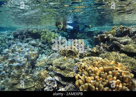 Snorkeler and beautiful coral reef underwater in the Red Sea