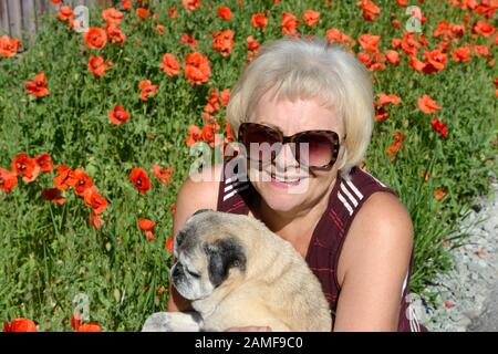 Close-up elderly woman portrait that sitting crouch down with pet pug dog that is sitting on her arms on background of bright scarlet poppies and gree - Stock Photo
