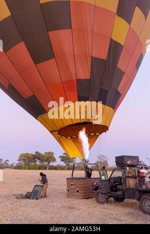 Hot air balloon being inflated at dawn, Bushman Plains, Okavanago Delta, Botswana - Stock Photo