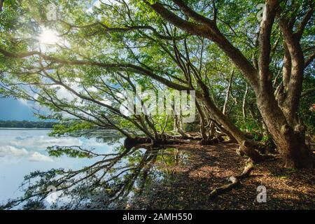 Sri Lanka Travel Destination. Jungle near colombo. Forest Tree refelction. Outdoor Activity in Srilanka. Jungle riversite. Big roots. - Stock Photo