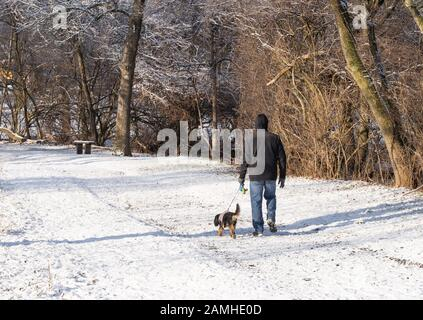 Man takes dog in park after a snow, back to camera.