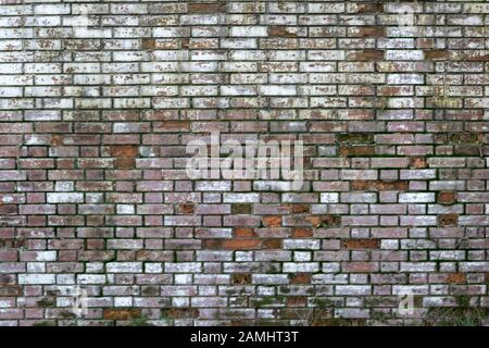 Old red brick wall with cracked paint and covered with moss. Creative vintage background - Stock Photo