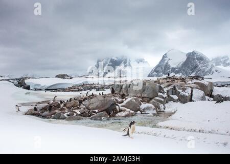 Peterman Island, Antarctic Peninsula, Antarctica - Stock Photo