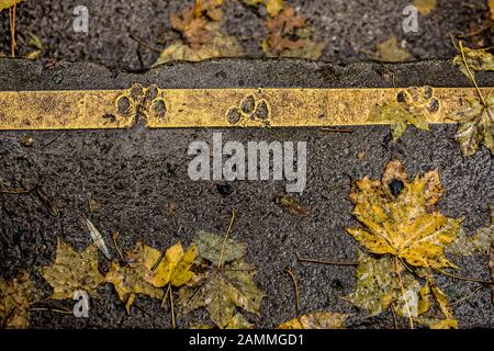 Dog paw prints on a yellow stripe marking a step in the woods between Hochstraße and Quellenstraße at the level of Rablstraße. The stripes probably have to dry first before you can walk over them, and a dog was faster. [automated translation] - Stock Photo