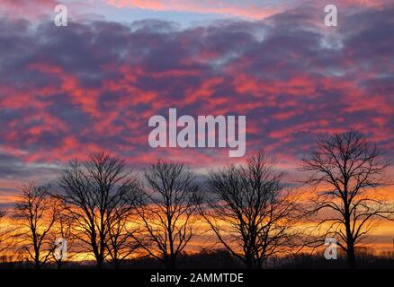 14 January 2020, Brandenburg, Frankfurt (Oder): The clouds in the morning sky over bare avenue trees are glowing in bright colours. Photo: Patrick Pleul/dpa-Zentralbild/ZB - Stock Photo