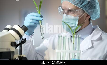 Scientific laboratory worker examining sprouts of artificially excreted cereals - Stock Photo